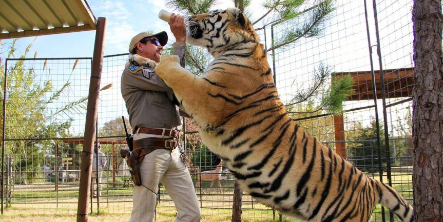 tiger-king-1585506200.jpg