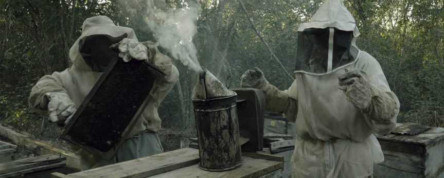 Review: ¿Qué les pasó a las abejas? — El gesto dehabitar